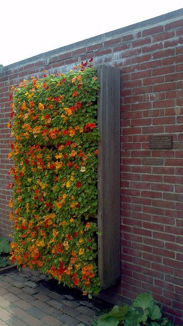 flores-nos-jardins