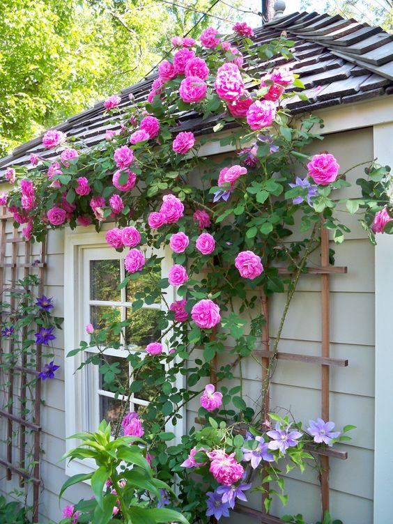 jardins-com-rosas