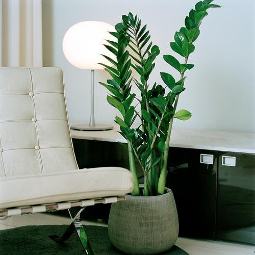 decoracao-de-ambientes-internos-com-plantas
