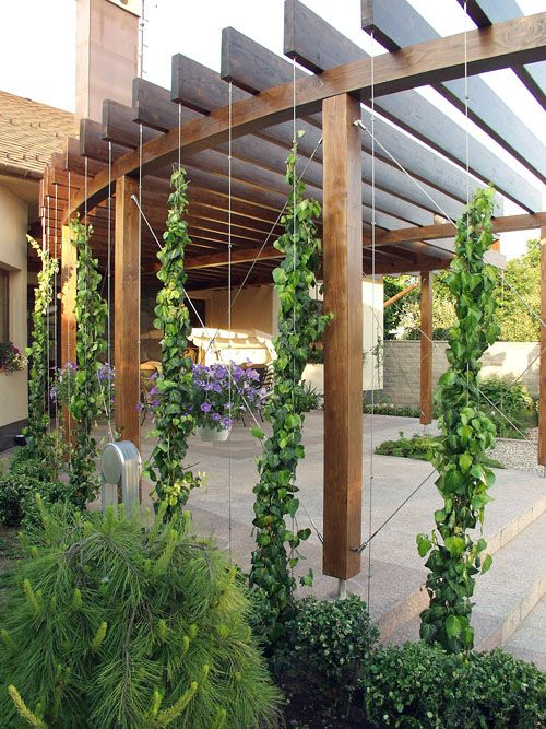 Pergolado 50 modelos inspiradores for Hops garden designs