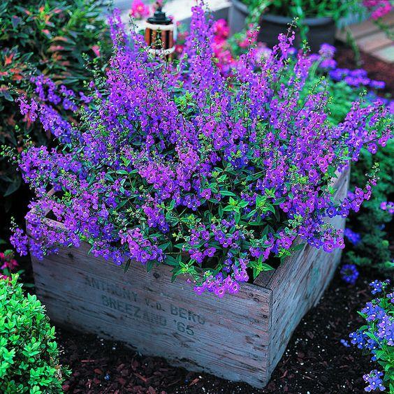 jardins-maravilhosos-com-flores