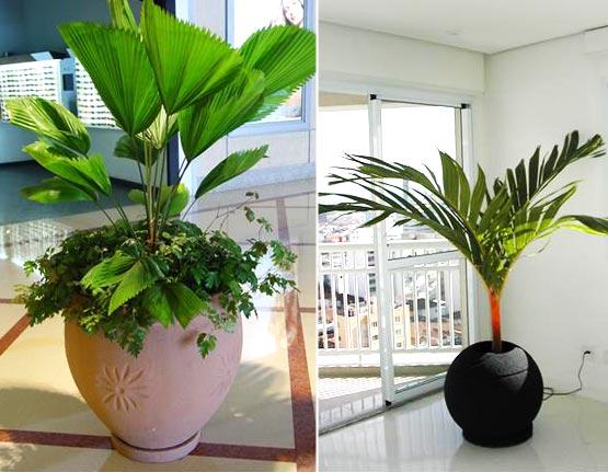 plantas-em-ambientes-interno