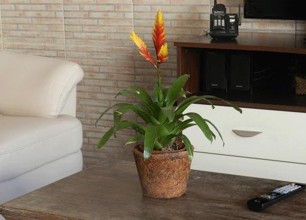 plantas-para-decoracao-de-ambientes
