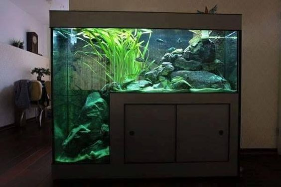 aquario bonito